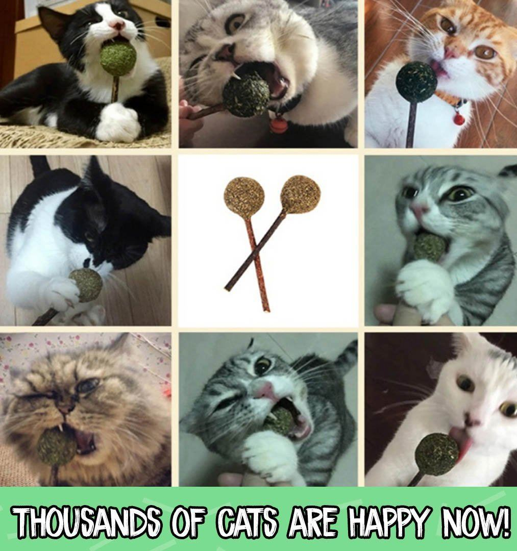 Catnip Lollipop