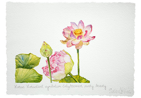Lotus Card by artist Susan LeVine