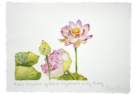 Lotus in Bud and Bloom Matted Giclee Print