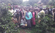 Load image into Gallery viewer, KENYA FT RIFT VALLEY KABNGETUNY WOMAN'S COFFEE