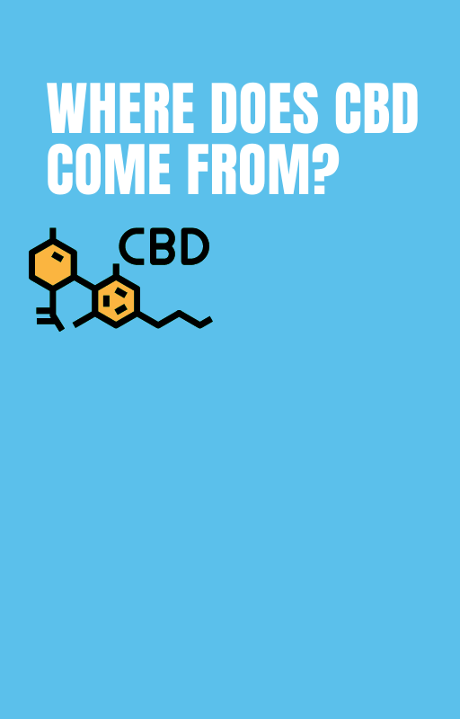 What to Look for in CBD Oil?