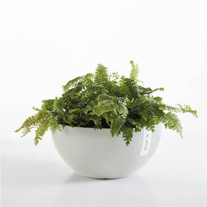 Ecopot Brussels Pot - *Local Delivery or Local Pick Up Only*