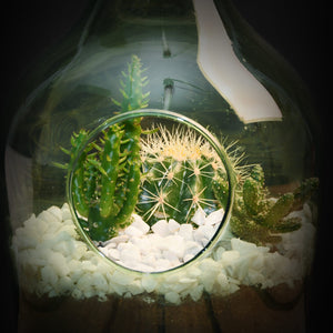 Green Glass Terrariums - *Local Pick Up Only*