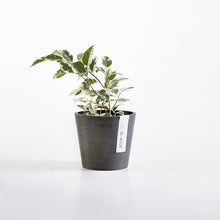 Load image into Gallery viewer, Ecopot Amsterdam Pot 13cm