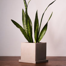 Load image into Gallery viewer, Concrete Square Plant Pots - *Local Delivery or Local Pick Up Only*