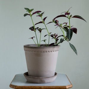 Helena Grey Plant Pots - LOCAL PICK UP ONLY