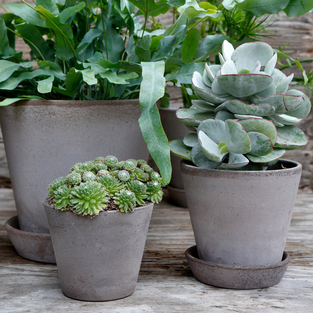 Julie Grey Plant Pots - *Local Pick Up Only*
