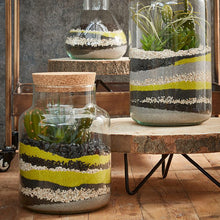 Load image into Gallery viewer, Chela Glass Terrarium - LOCAL PICK UP ONLY