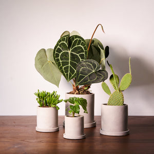 Concrete Cylindrical Plant Pots - *Local Delivery or Local Pick Up Only*