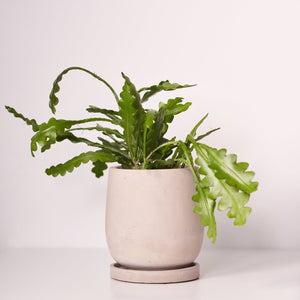 Concrete Round-Based Plant Pots - *Local Delivery or Local Pick Up Only*