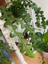 Load image into Gallery viewer, XL Handmade Macrame Plant Hanger