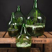 Load image into Gallery viewer, Green Glass Terrariums - *Local Pick Up Only*