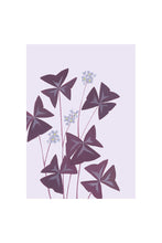 Load image into Gallery viewer, Stengun Drawings Oxalis triangularis Card