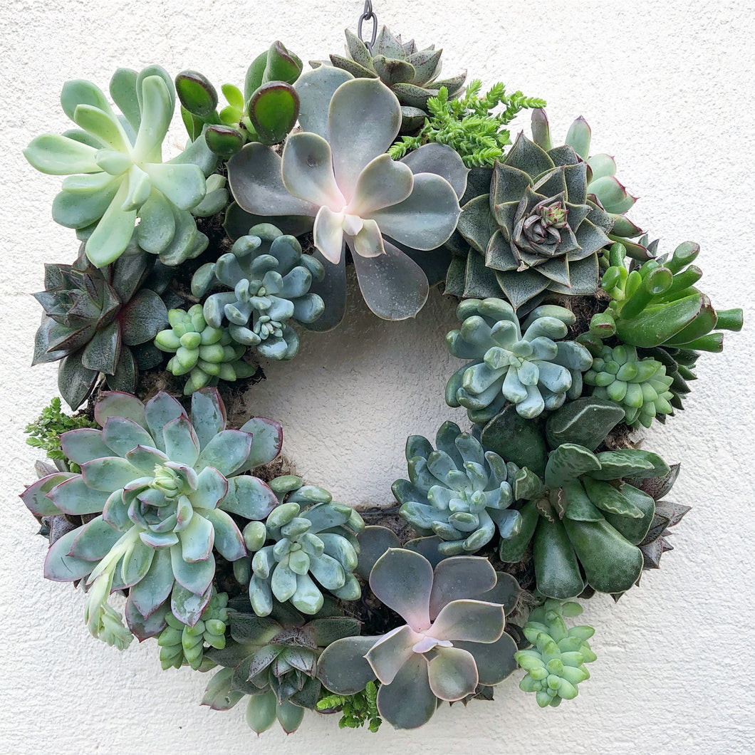 Make Your Own Living Succulent Wreath Workshop