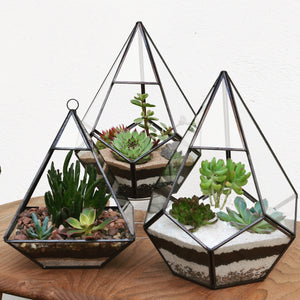 Make Your Own Open Terrarium Workshop