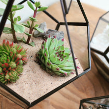 Load image into Gallery viewer, Make Your Own Open Terrarium Workshop