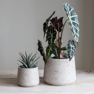 Tapered Cement Pots in Light Grey - *Local Delivery or Local Pick Up Only*