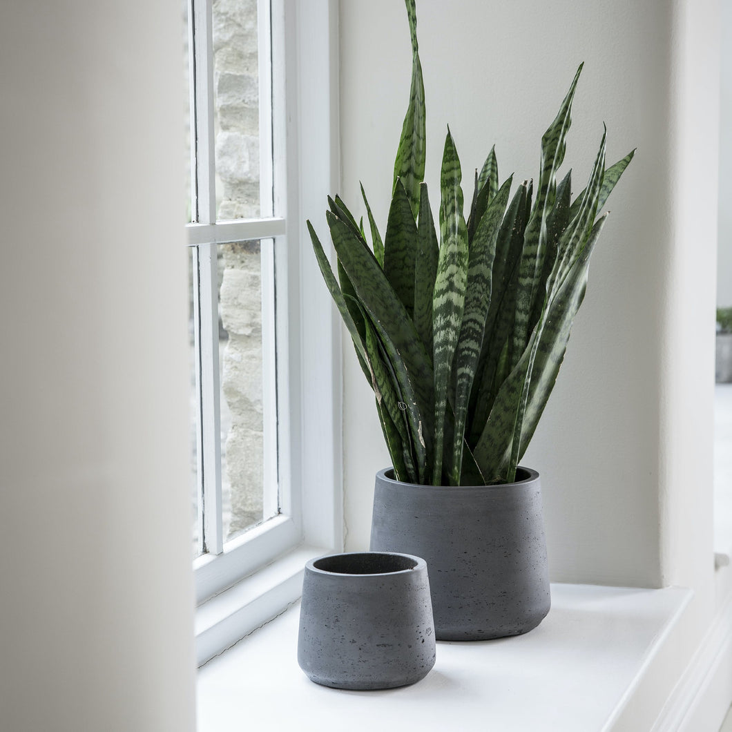 Tapered Cement Pots in Dark Grey - *Local Pick Up Only*