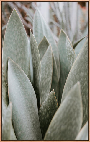 Leaf Closeup Succulent 1
