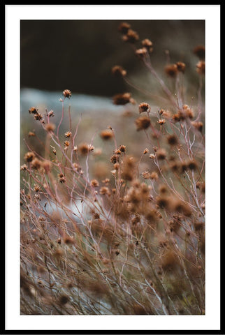 Grass Flowers Rust 1