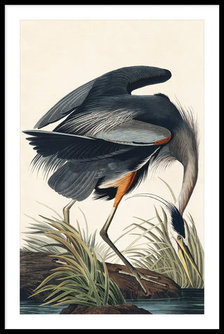 Vintage Great Blue Heron