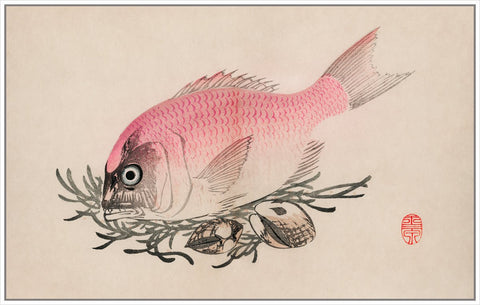 Vintage Fish Illustration