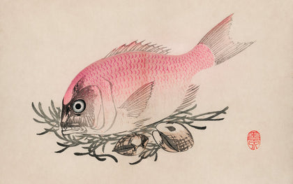 Ukiyo-e illustration of Fish and clams by Mochizuki Gyokusen