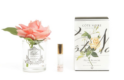 Côte Noire Perfumed Natural Touch Single Rose - Clear - White Peach - GMR05