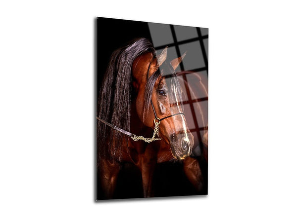 Andalusian Horse Glass Print Wall Art