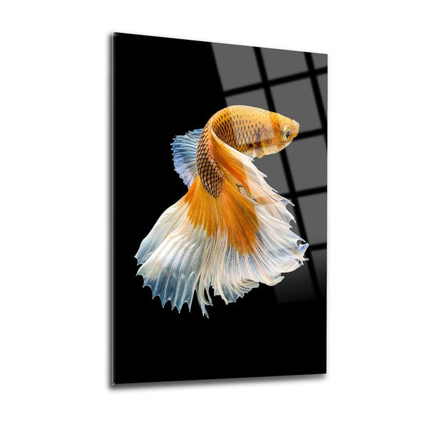Beta Fish Glass Print Wall Art