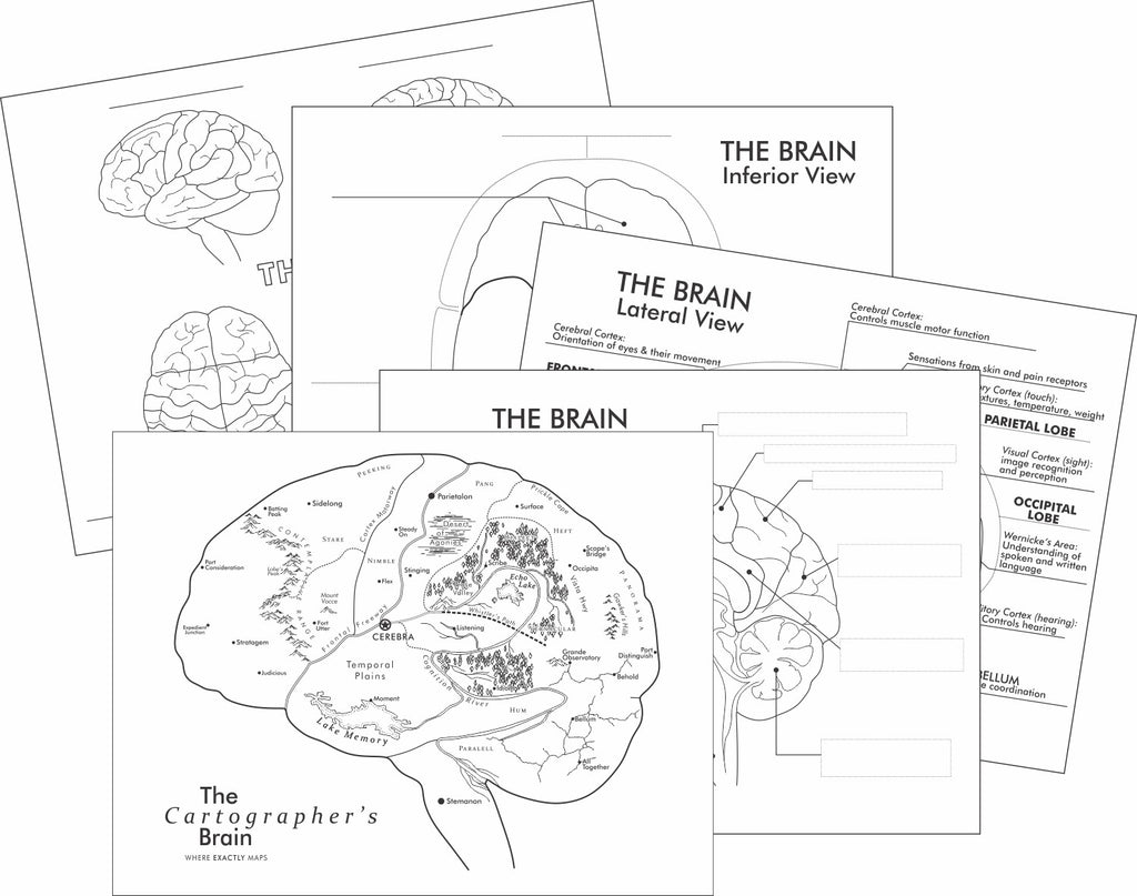 The Brain as a Map - and detailed learning the brain worksheets