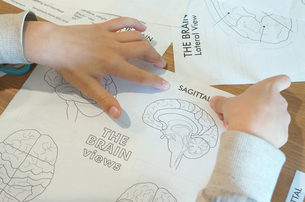 Boys hands pasting labels onto a learning the brain worksheet