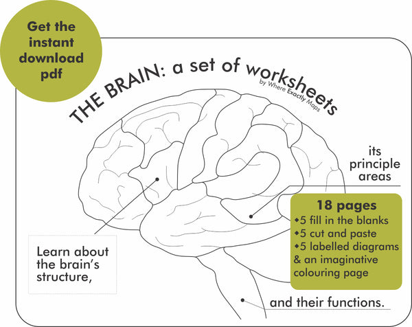 Get the 18 page instant download of brain worksheets