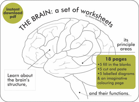 The Brain: a set of worksheets by Where Exactly Maps