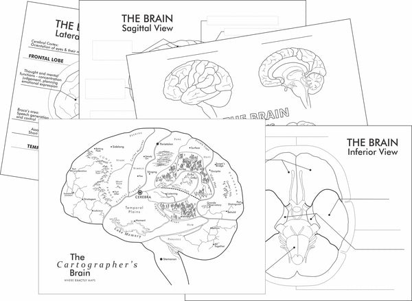 Preview pages of learning worksheets about the brain. Includes the brain imagined as a map colouring page by Where Exactly Maps
