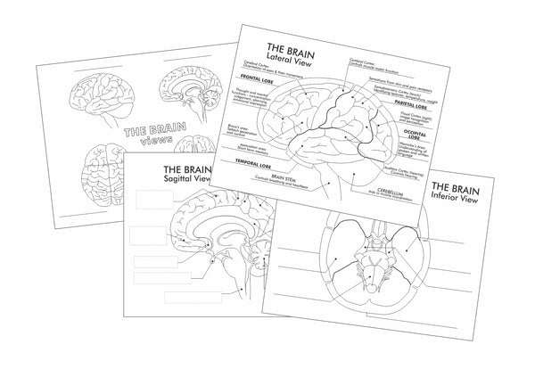 Preview of fill in the blank and cut and paste worksheets on the brain by Where Exactly Maps