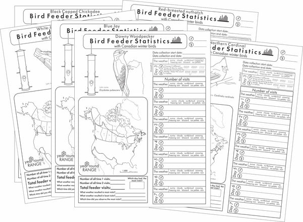 Bird Feeder Statistics with Canadian Winter birds worksheets display