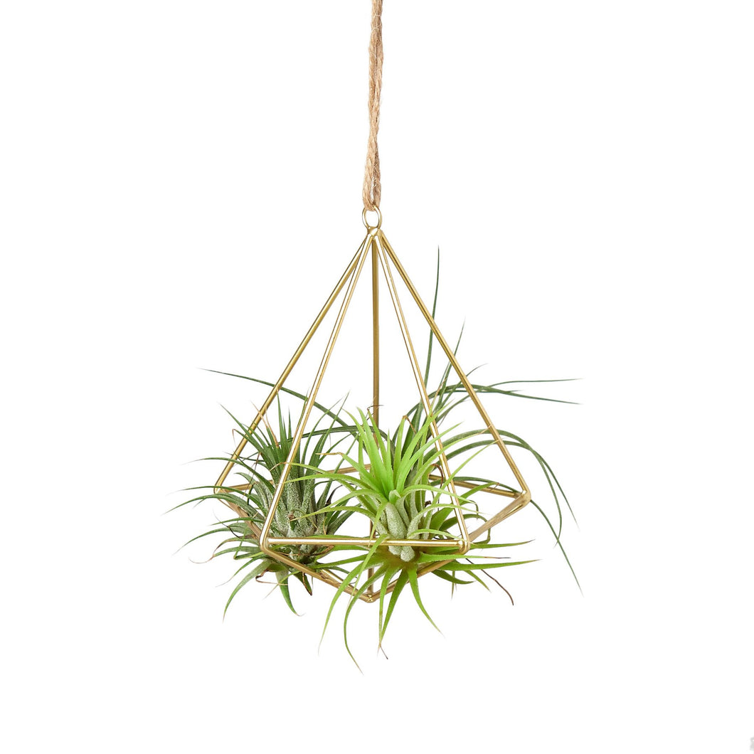 brass air plant holder