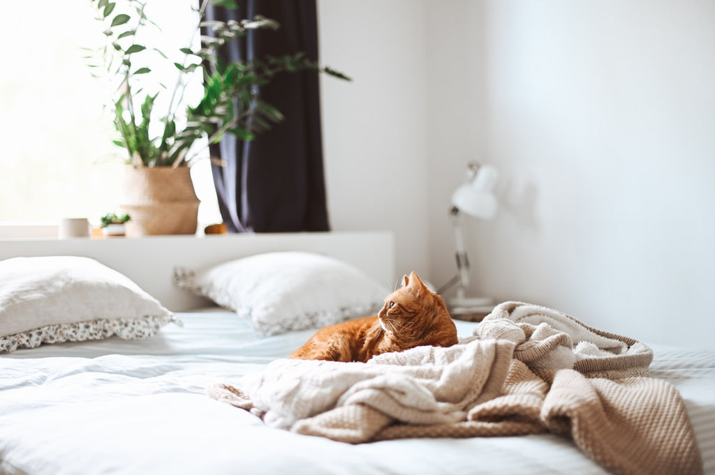 An orange cat snuggles in a bedding kept fresh with Clean Crate products