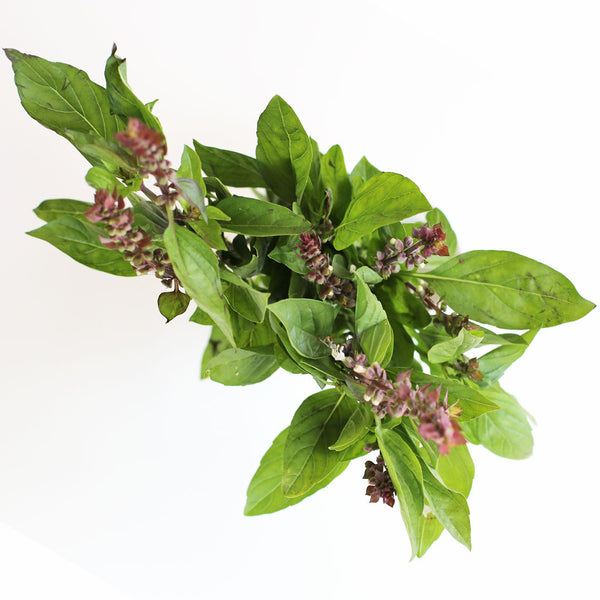 Basil Thai (Bunch)