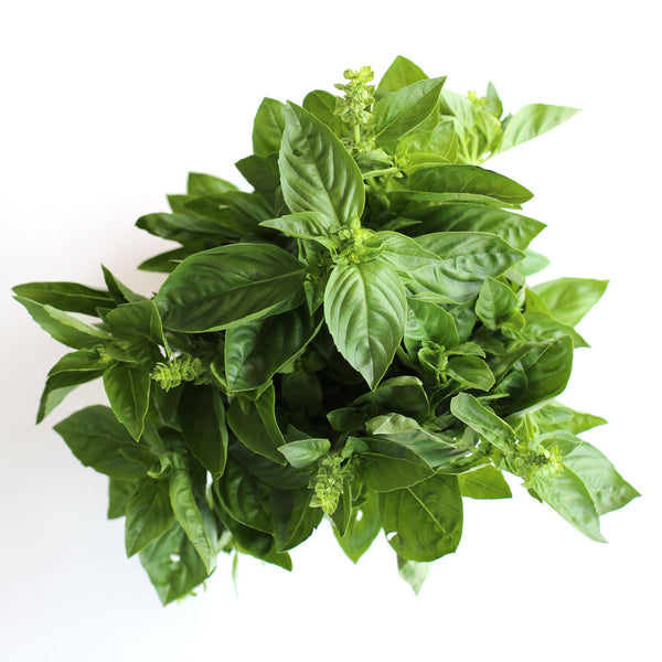 Basil (Bunch)