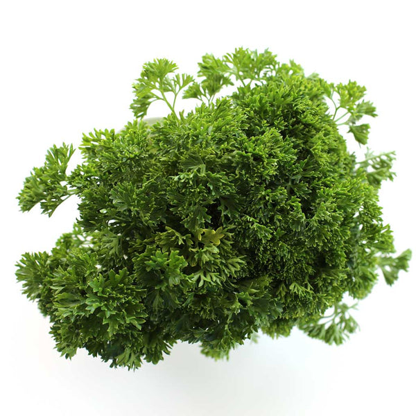Parsley Curly (Small Bunch)