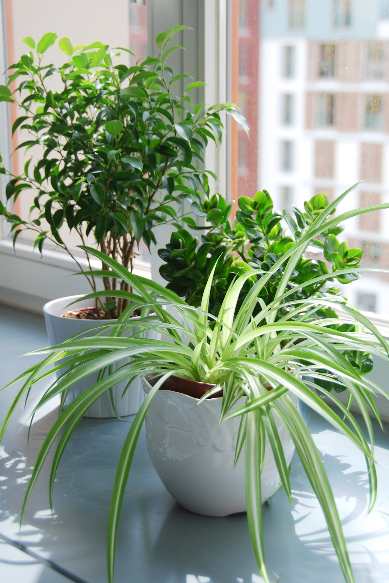 mold forming from indoor plants