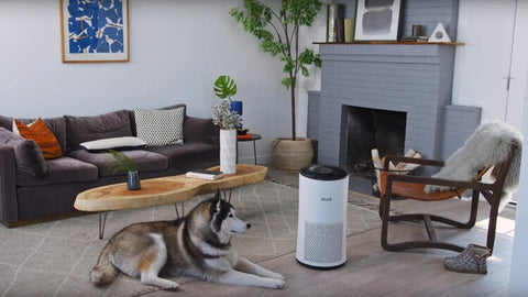 Dog with Levoit Air Purifier in home