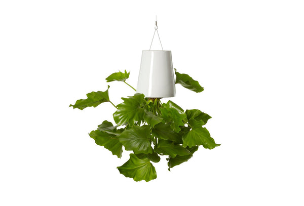 Boskke Skyplanter - Small