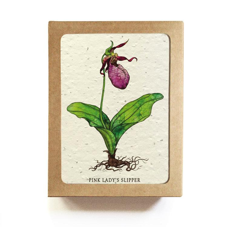 Seed Cards - Gift Set of 8