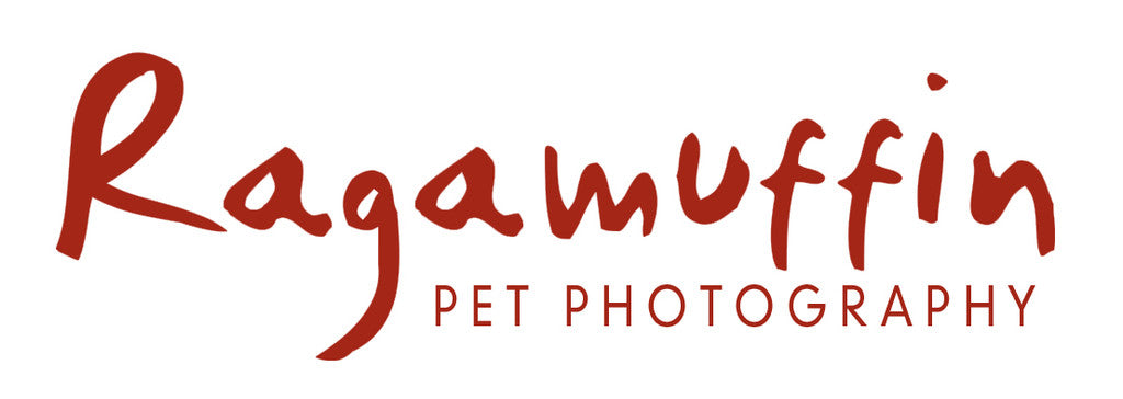 http://ragamuffinpetphotography.com.au/
