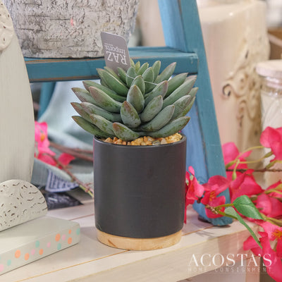 Potted Succulent - Acosta's Home