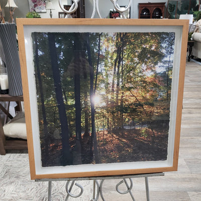"""Sunshine In The Woods"" Framed Picture"