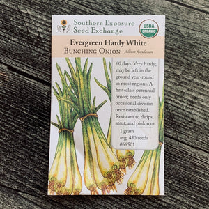 Evergreen Hardy White Scallions